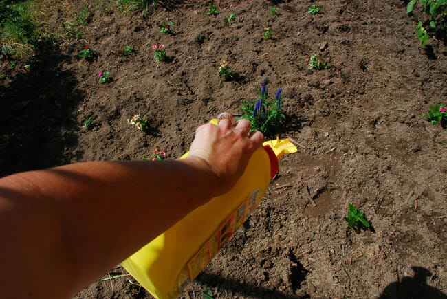 flowerbed renovation